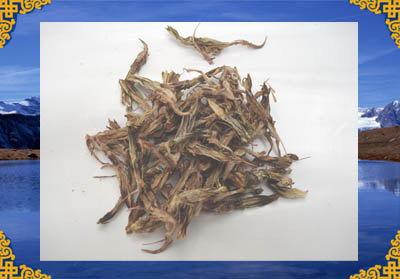 西藏白龙胆花