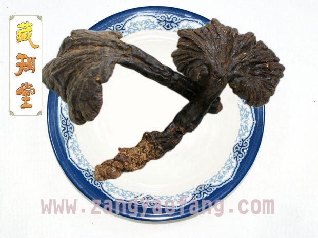 西藏野生赤白灵芝